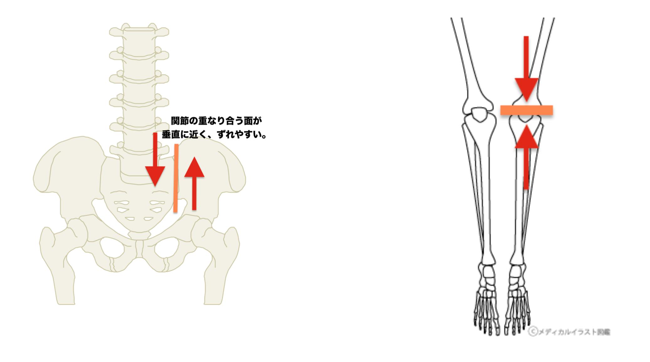 仙腸関節と膝関節