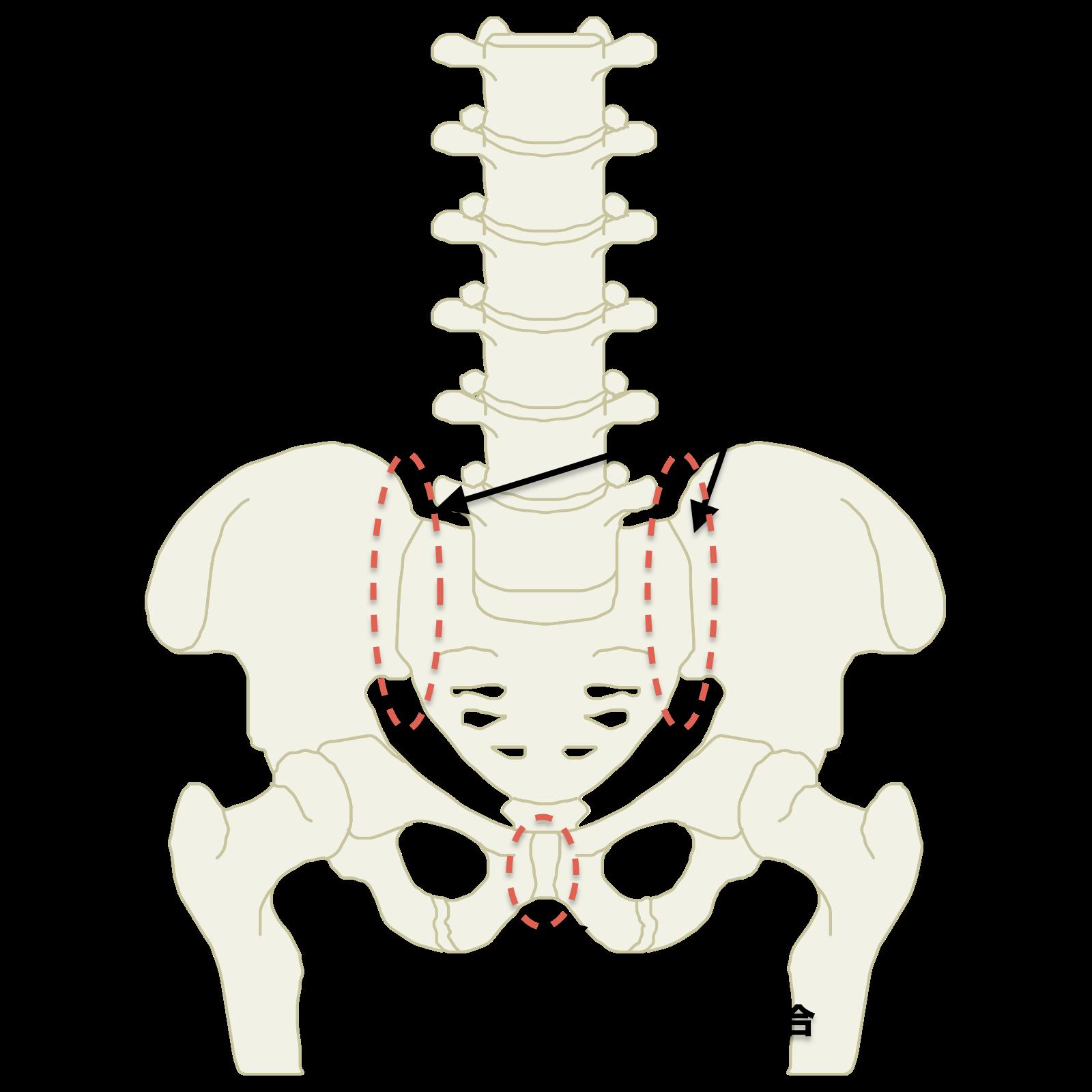仙腸関節・恥骨結合