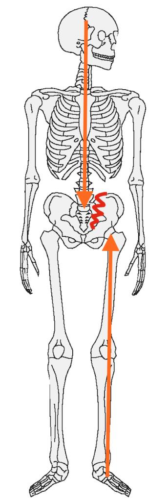 立位・骨盤への負担