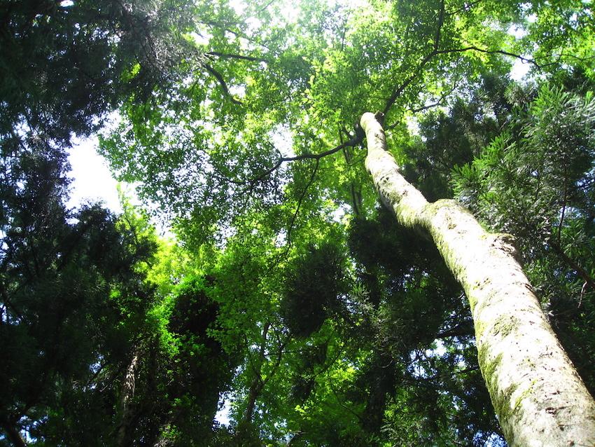 木を見て森を見る